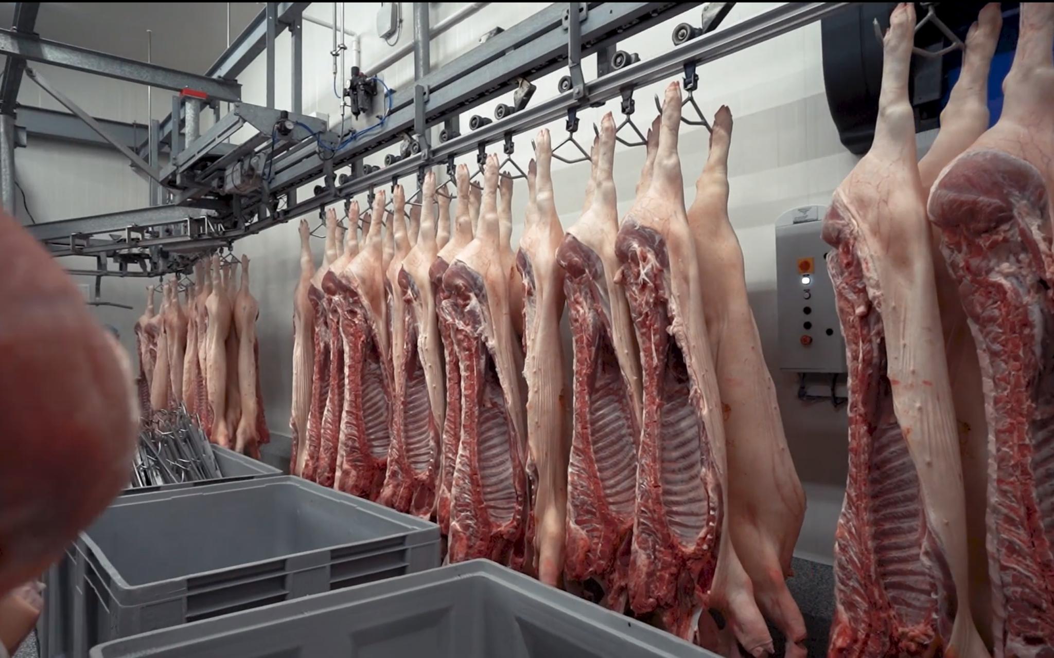 TRIGR. media - Destoop - videografie - De stoop - Waregem - varkensversnijderij - varkensvlees - aftermovie - bedrijfsfilm - productieproces